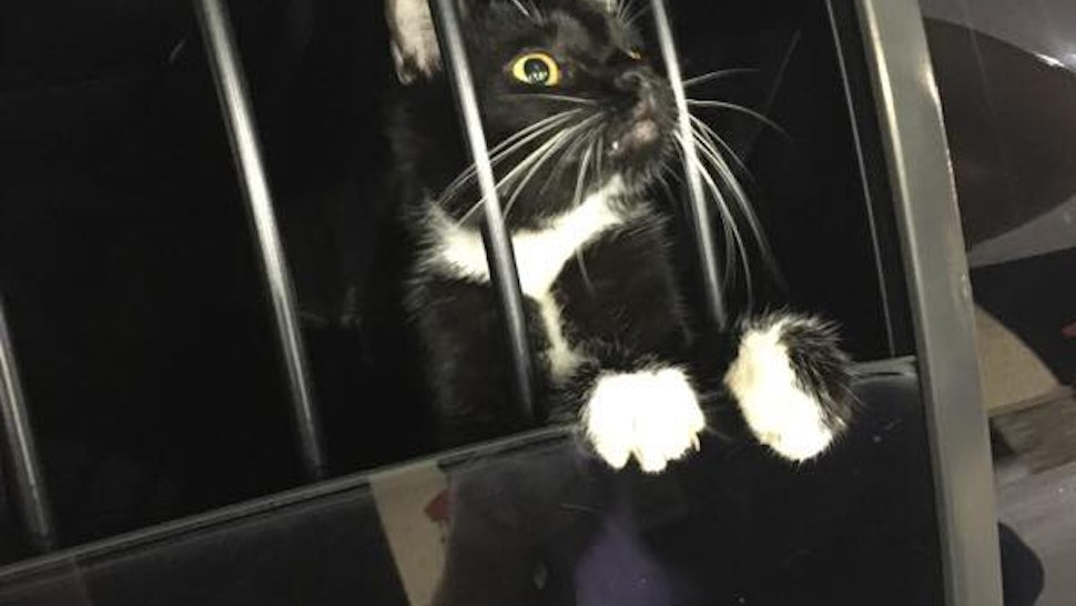 """Police in Florida responding to """"suspicious noises"""" discovered a cat was the culprit."""