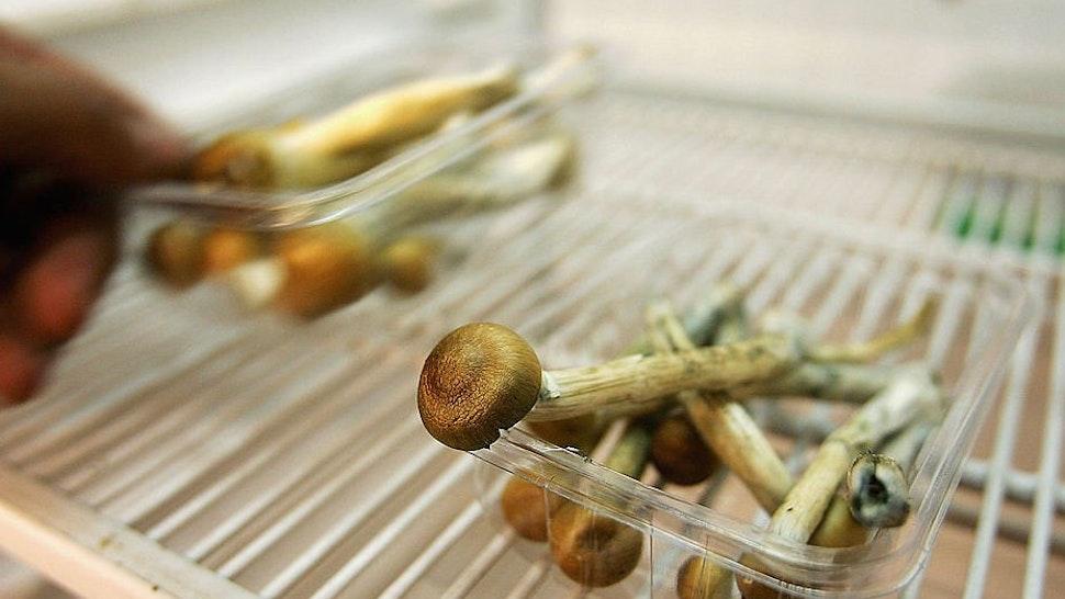Magic mushrooms.