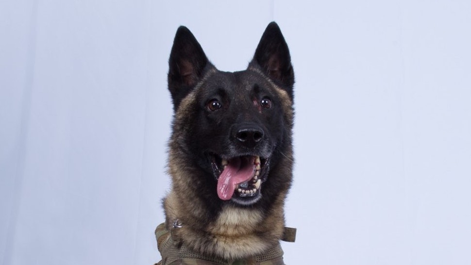 The military working dog who sustained minor injuries during the raid has returned to duty.