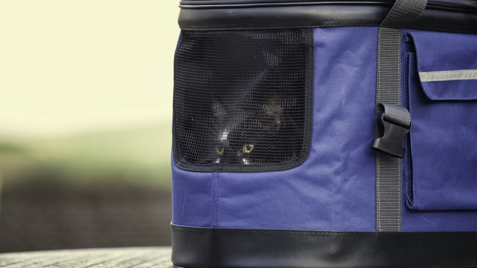 Cat arrives at new home in a pet carrier - stock photo