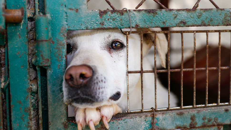 A mixed-breed dog looking sad behind a fence in a dog shelter in Mexico City - stock photo