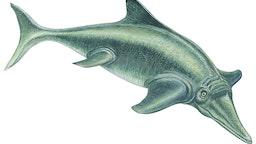 Ichthyosaur, Ichthyosaur (Ichthyosaurus).