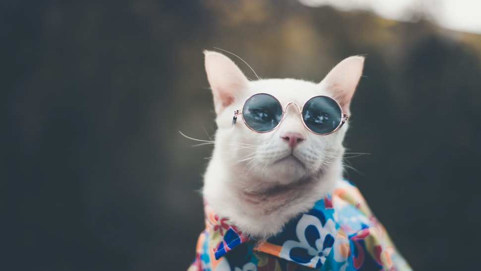Close-Up Of Cat Wearing Sunglasses - stock photo