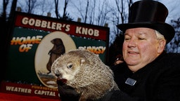 """PUNXSUTAWNEY, PA - FEBRUARY 2: Official groundhog handler Bill Deeley holds Punxsutawney Phil on February 2, 2006 in Punxsutawney, Pennsylvania. Every February 2, people gather at Gobbler's Knob, a wooded knoll just outside of Punxsutawney to watch Punxsutawney Phil look for his shadow. If he sees his shadow, it means six more weeks of winter. If he does not see his shadow, it means spring is just around the corner. The legend of Groundhog Day is based on an old Scottish couplet: """"If Candlemas Day is bright and clear, there'll be two winters in the year."""" (Photo by J"""