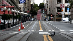 A pigeon crosses an empty Powell Street during the coronavirus pandemic on March 30, 2020 in San Francisco, California.