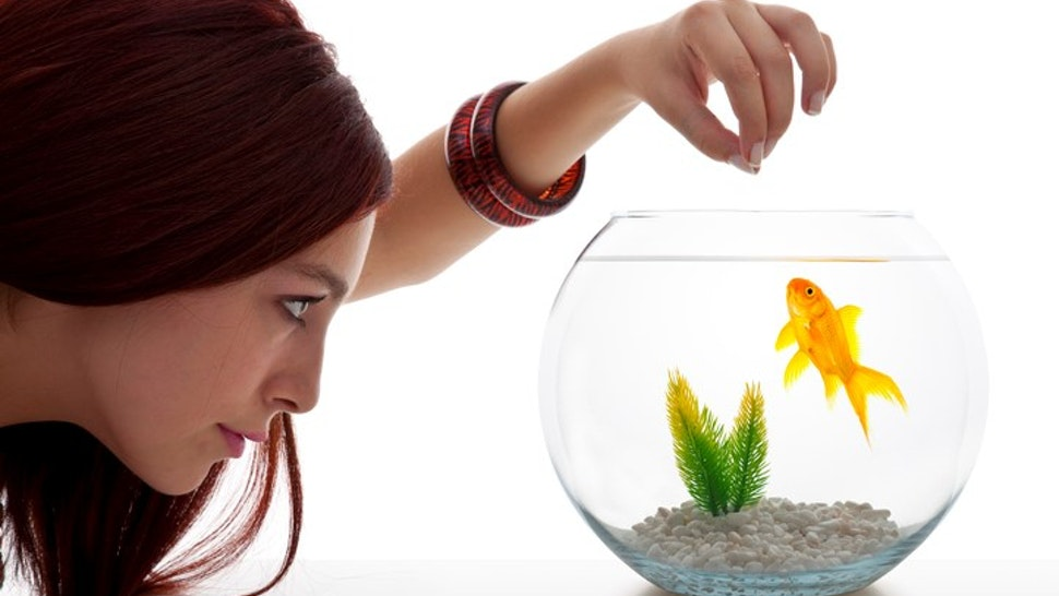 Young woman looking at fish tank