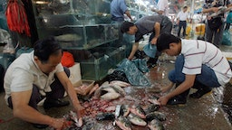 Beijing, CHINA: Chinese seafood vendors prepare fresh fish at a wet market in Beijing, 03 July 2007. Athletes and visitors heading to Beijing for the Olympics should not be concerned by recent Chinese food scandals, as many safety measures are being put in place for the Games, meanwhile International alarm over Chinese food exports has been building for weeks amid reports of toxic produce endangering lives in the United US and other countries. AFP PHOTO/TEH ENG KOON