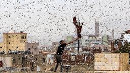 TOPSHOT - A man tries to catch locusts while standing on a rooftop as they swarm over the Huthi rebel-held Yemeni capital Sanaa on July 28, 2019. (Photo by Mohammed HUWAIS / AFP) (Photo credit should read