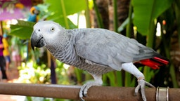 Close-Up Of African Grey Parrot Perching On Pipe By Plants - stock photo