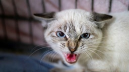 Aggressive Angry Kitten In Cage
