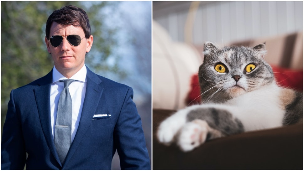 Gidley and cat