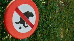 No dog pooping sign in the park.