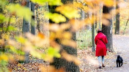 A woman walks with her dog past autumnally discoloured leaves in the city forest Eilenriede.