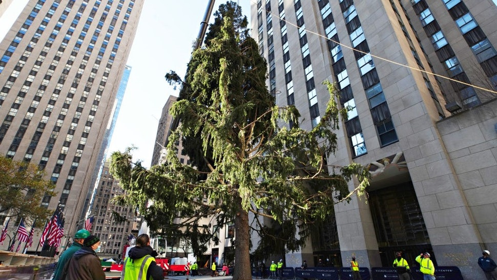 NEW YORK, NEW YORK - NOVEMBER 14: The Rockefeller Center Christmas Tree arrives at Rockefeller Plaza and is craned into place on November 14, 2020 in New York City. (Photo by
