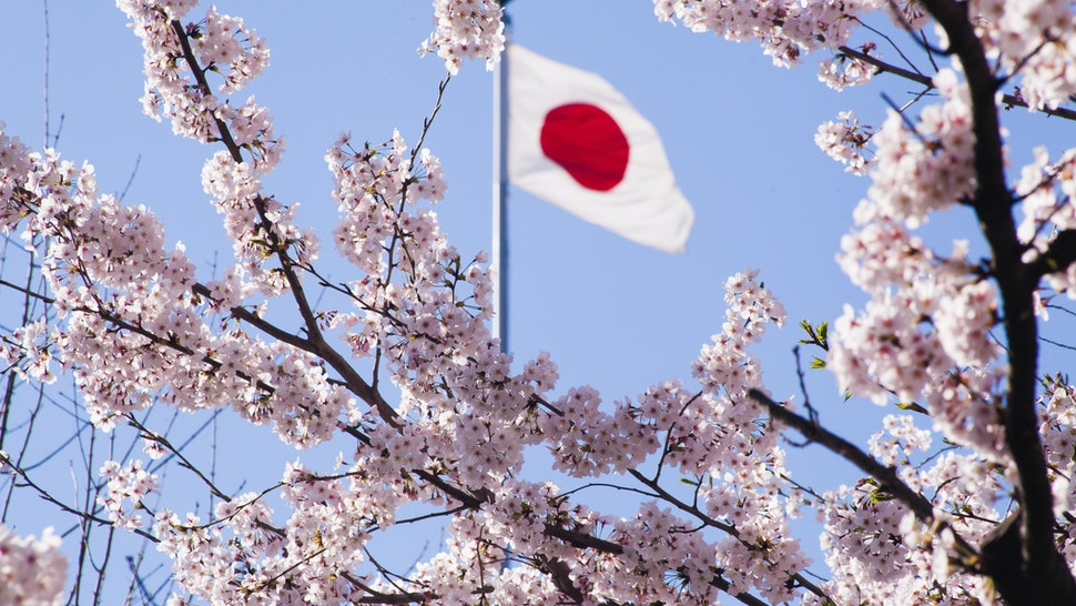 Japanese flag and cherry blossoms