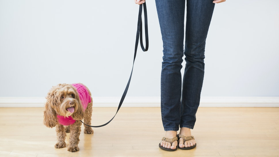Woman holding dog on leash
