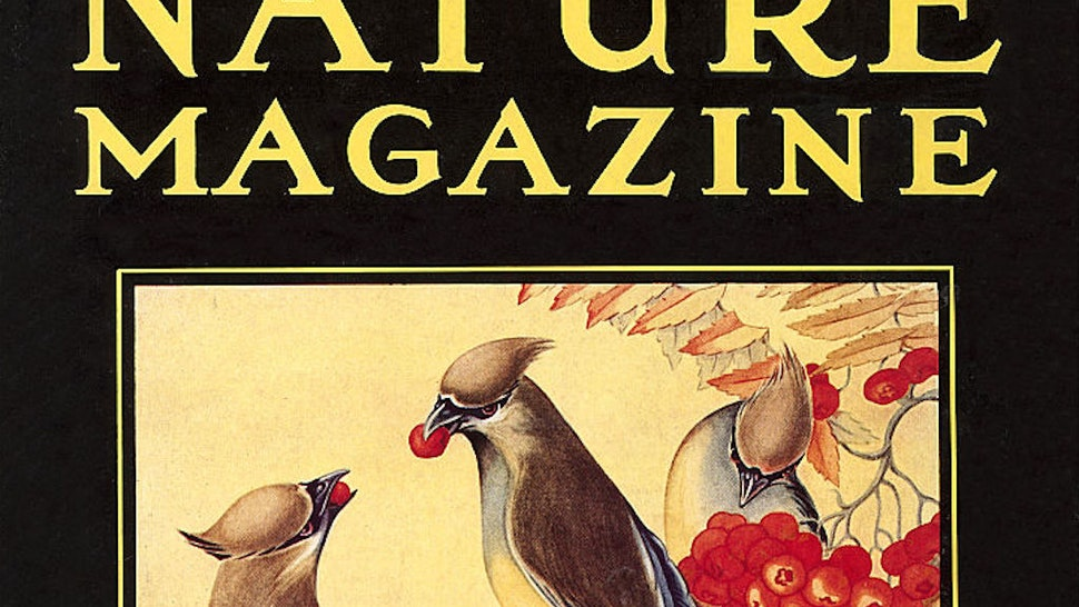Vintage illustration of Nature Magazine Cover, Birds, 1930s.