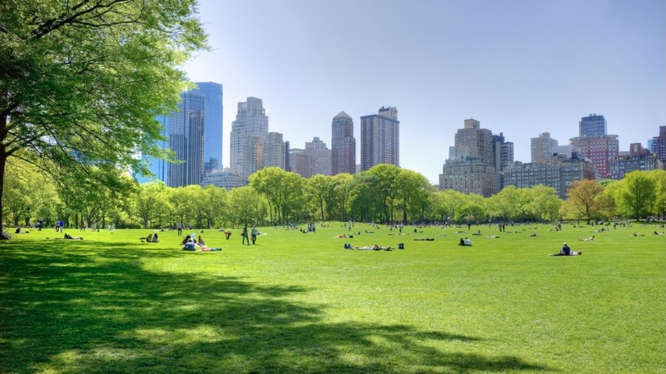 Great lawn in Central Park - stock photo Tetra Images via Getty Images