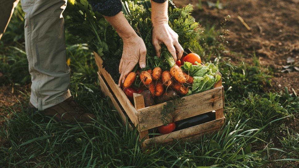 Low Angle View Of Farmer Vegetables On Field - stock photo