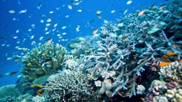 Reef scene with fish and corals. Wheeler Reef, Great Barrier Reef off Townsville, Queensland, Australia. (Photo by Auscape/Universal Images Group via Getty Images)