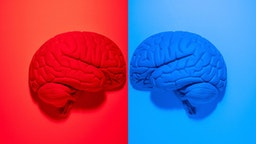 Vibrantly colored red and blue anatomical human brain models facing each other on red and blue backgrounds.